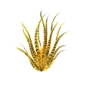 Logo kokelikelo